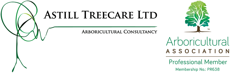 Professional and independent tree consultancy for the Somerset, Dorset & Wiltshire